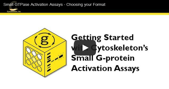 small GTPase Activation Assays