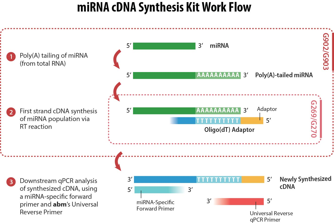 synthesise cdna The thermo scientific™ revertaid™ first strand cdna synthesis kit is a complete system for efficient synthesis of first strand cdna from mrna or total rna templates.
